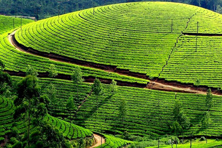 Best of Ooty and Kodaikanal